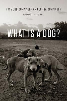 Image for What Is a Dog?