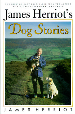 Image for DOG STORIES