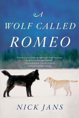 Image for A Wolf Called Romeo