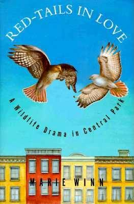 Image for Red-Tails in Love: A Wildlife Drama in Central Park