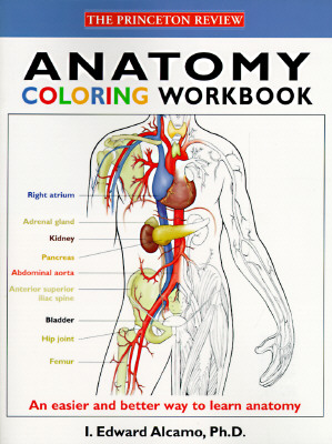 Image for Anatomy Coloring Workbook (Princeton Review)