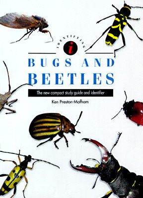 Image for Identifying Bugs and Beetles (Identifying Guide Ser.)