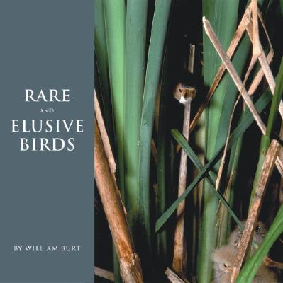 Image for RARE AND ELUSIVE BIRDS OF NORTH AMERICA