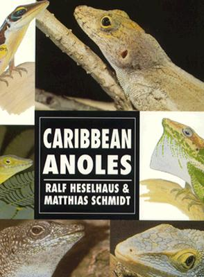 Image for CARIBBEAN ANOLES