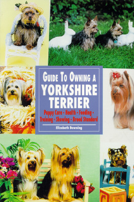 Image for GUIDE TO OWNING A YORKSHIRE TERRIER