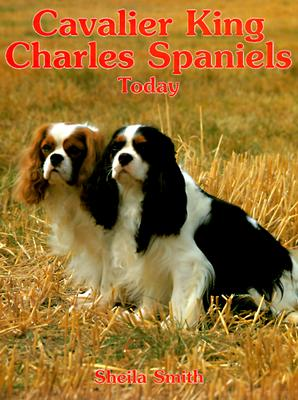 Image for CAVALIER KING CHARLES SPANIELS TODAY