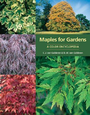 Image for Maples for Gardens: A Color Encyclopedia