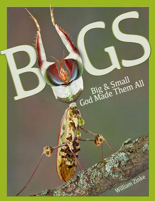 Image for Bugs Big & Small God Made Them All