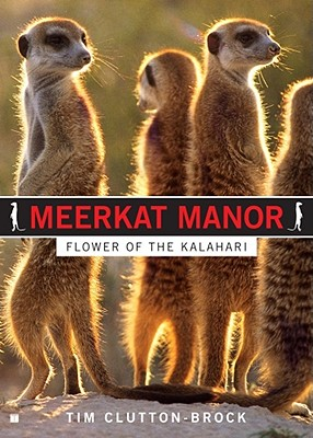 Image for Meerkat Manor: Flower of the Kalahari