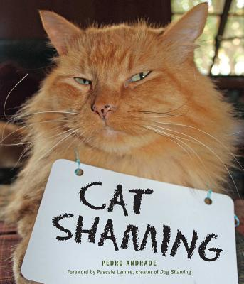 Image for Cat Shaming