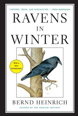 Image for Ravens in Winter