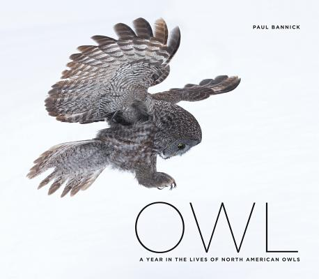 Image for Owl: A Year in the Lives of North American Owls