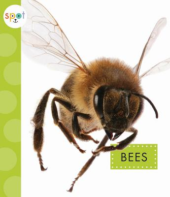 Image for Bees (Spot)