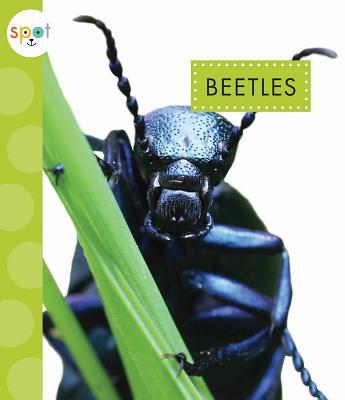 Beetles (Spot), Black, Nessa