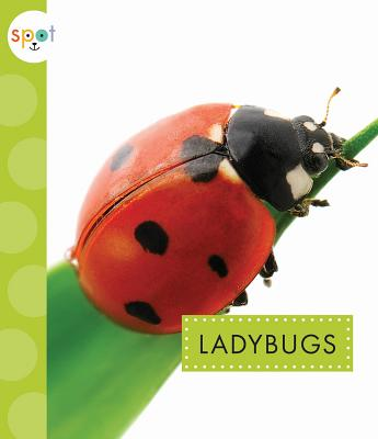 Image for Ladybugs (Spot)