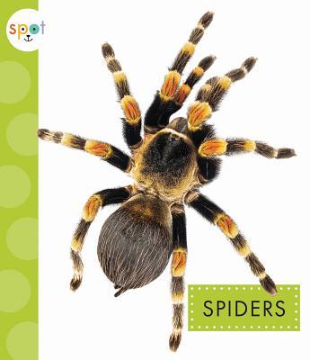 Spiders (Spot), Black, Nessa